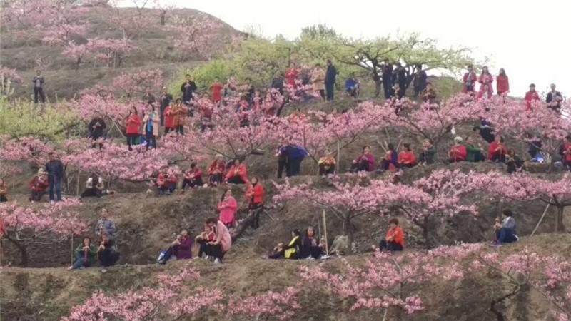 三生三世十里桃花歌谱葫芦丝